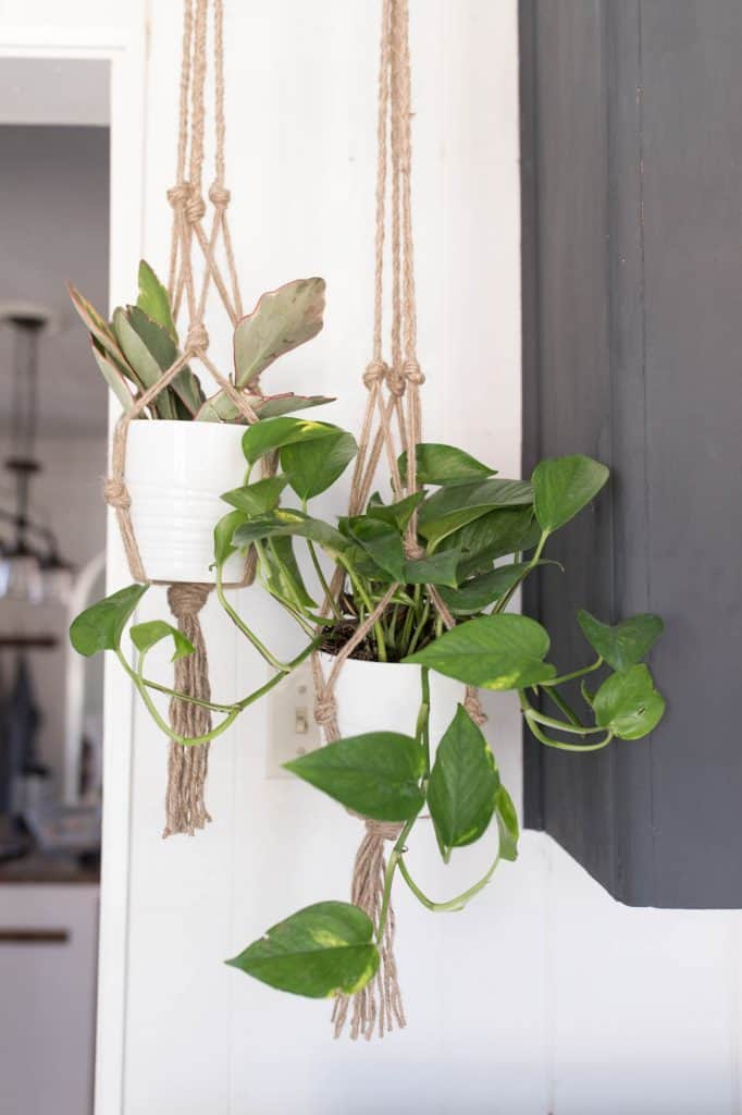 two macrame plant hangers hanging with plants - Jute Plant Hanger DIY with Video Tutorial