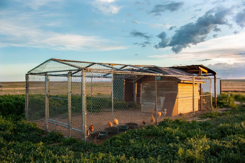 Chicken coop for backyard chickens