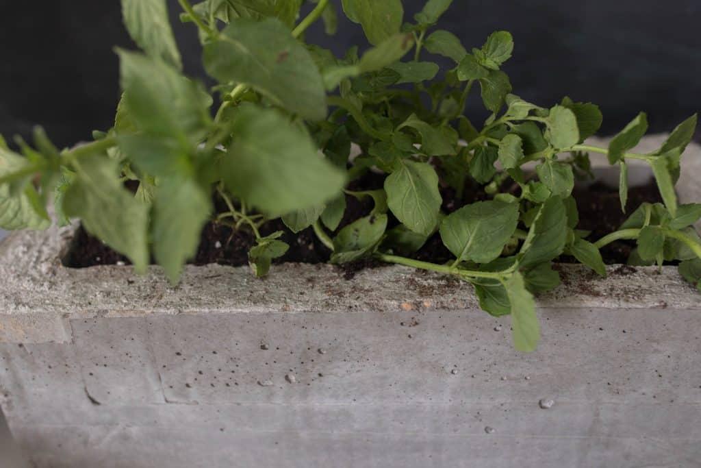 DIY concrete herb planter how to make