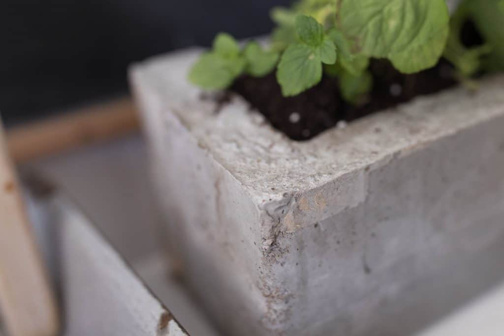 DIY concrete herb planter with cardboard molds
