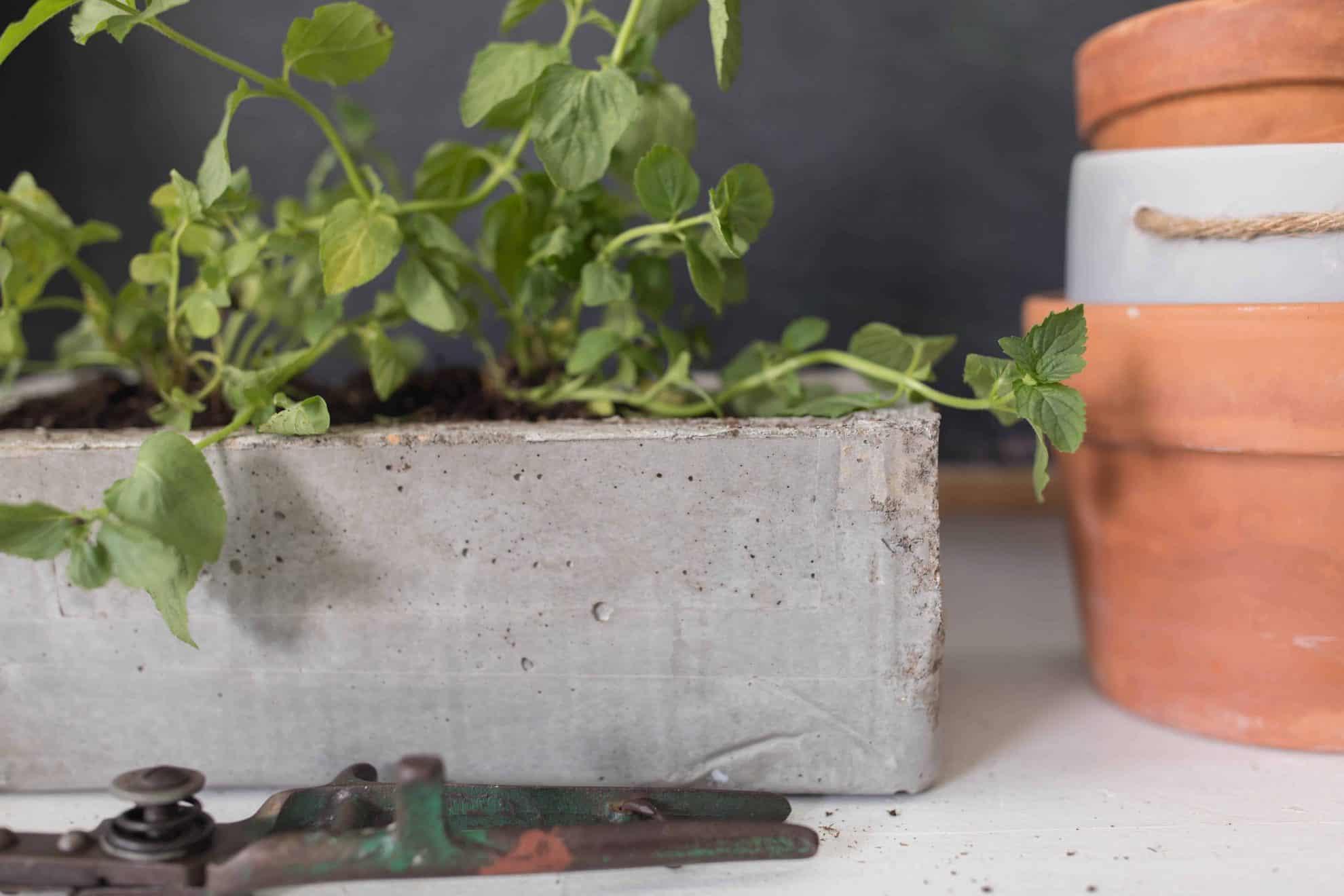 DIY Concrete Planter