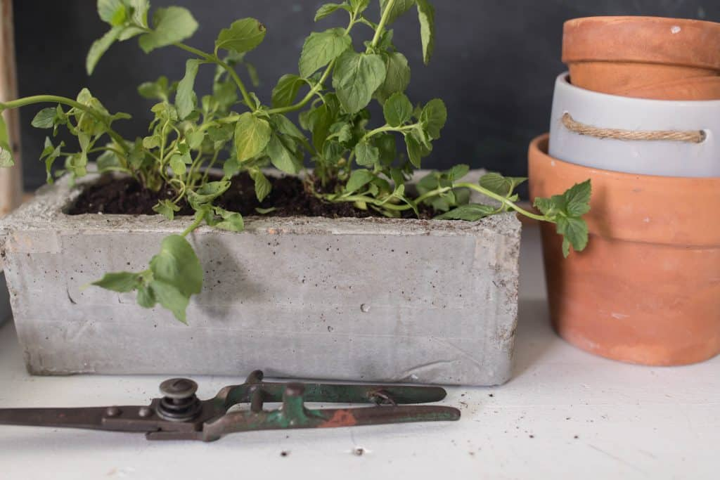 how to make a concrete herb planter diy concrete projects