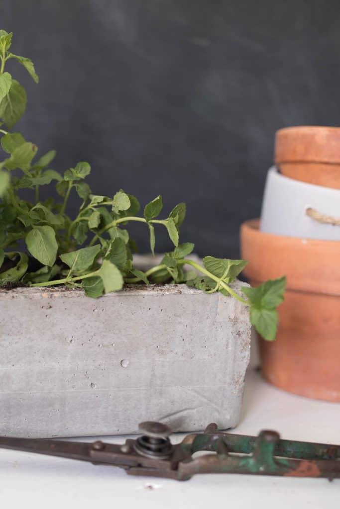 How to make a DIY Concrete Planter