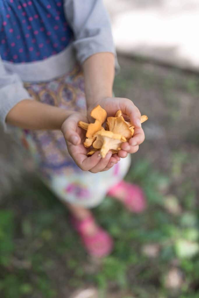 Girl holding out handfull of chanterelle mushrooms. Foraging Chanterelle Mushrooms | Wild Edibles