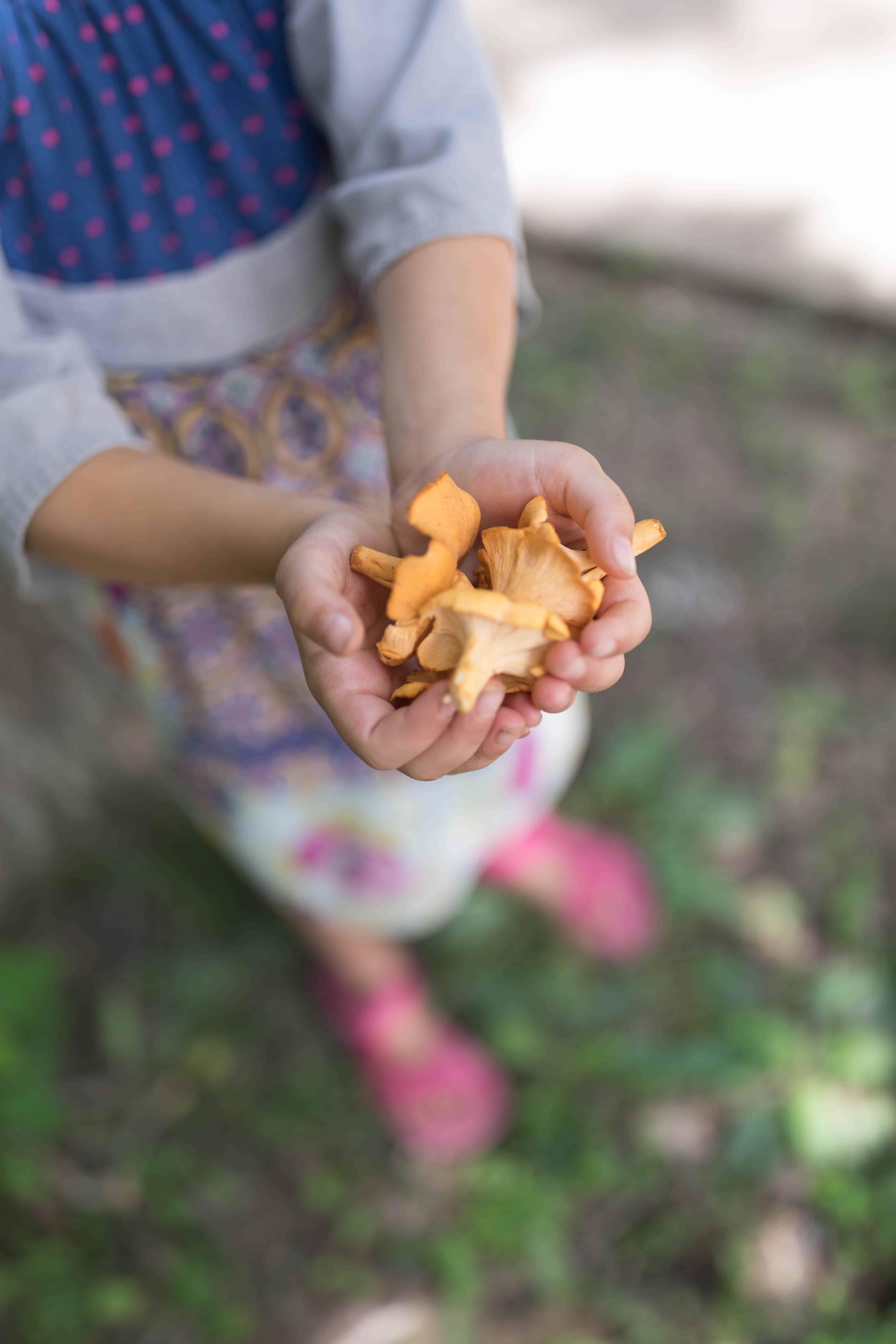 FORAGING CHANTERELLE MUSHROOMS WILD EDIBLES FARMHOUSE ON