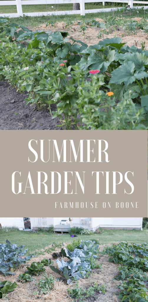 Summer vegetable garden tips