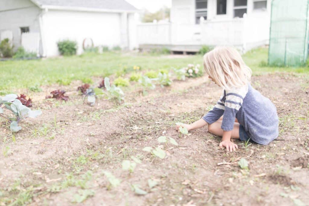 Stonyfield Playfree Initiative the importance of organic gardening