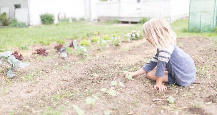 Stonyfield Playfree Initiative the importance of organic gardening