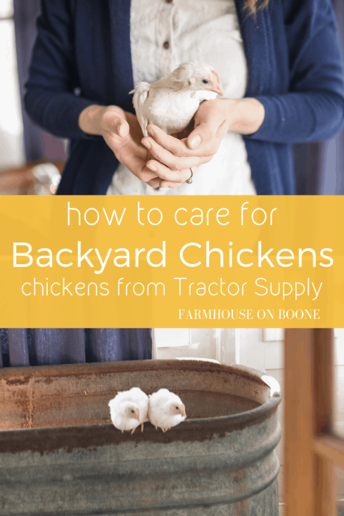 How to Care for Backyard Chickens - Farmhouse on Boone