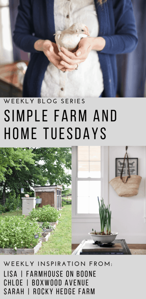 Simple Farm and Home Tuesday how to grow zinnias hot care for backyard chickens and how to force bulbs