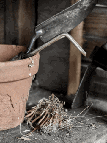 Simple farm and hone tuesday how to plant and grow onions