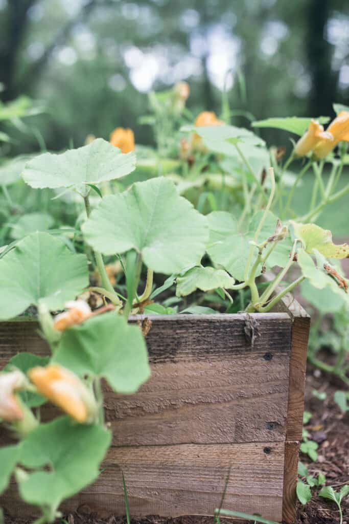 Raised Garden Beds Diy Cheap How To Build