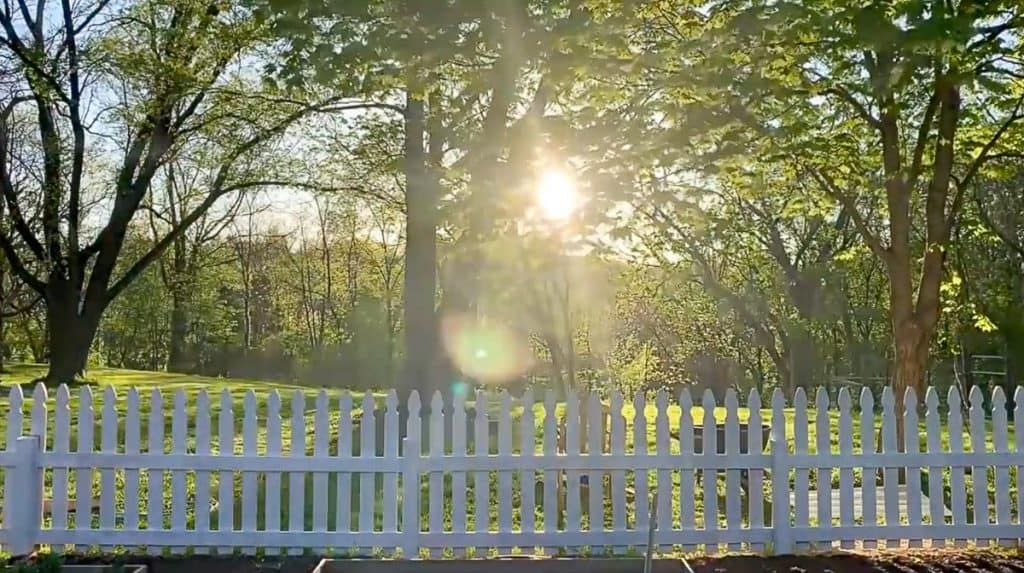 white picket fence with trees and the sun setting in the background