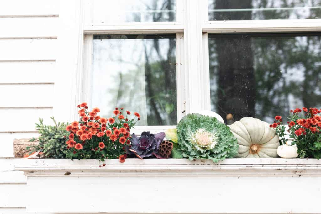 fall window box with mums, cabbages, pumpkins, and kales