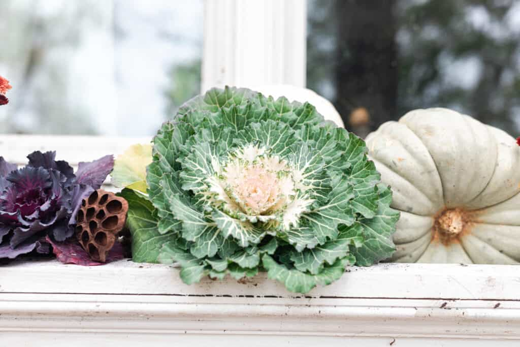 close up image of ornamental cabbages, kales and pumpkins in a window box