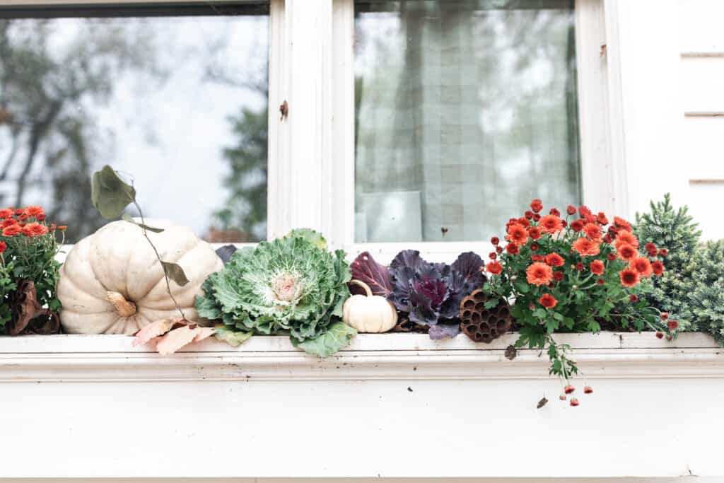 window bow full of mums, cabbages, and pumpkins