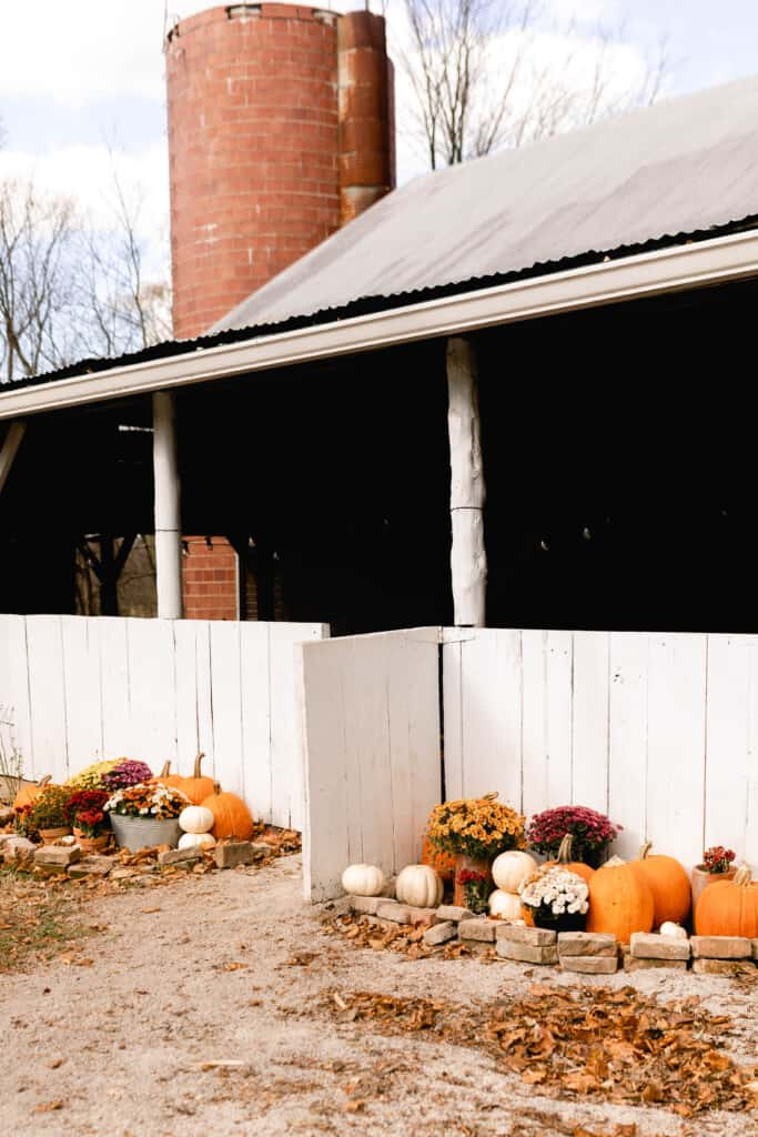 mums and pumpkins stacked and lining the side of a white barn