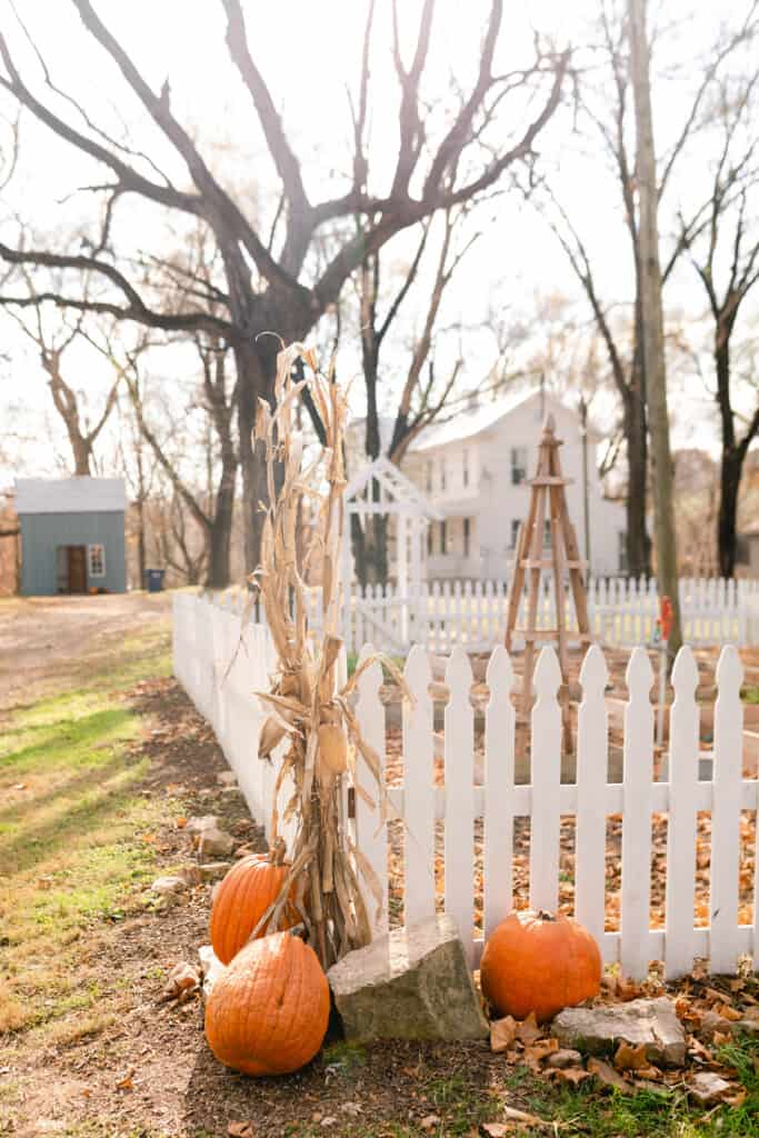 corn stalks tied to the corners of a white picket fence with pumpkins on the ground